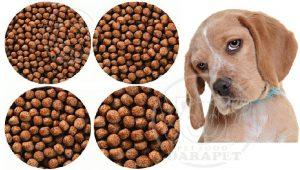 بازار خرید غذای سگ ایرانی