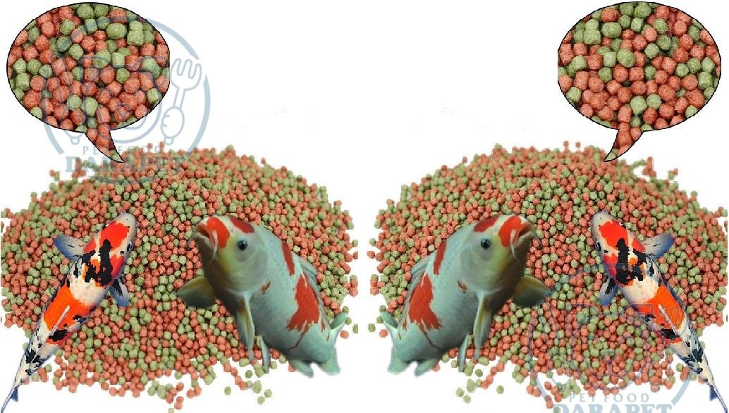 توزیع کننده غذای خشک ماهی