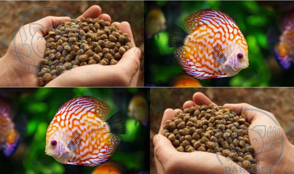 آشنایی با غذای ماهی آکواریومی