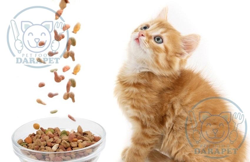 راهنمای خرید غذا گربه