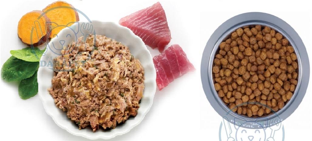 چه نوع غذایی برای گربه مفید است؟