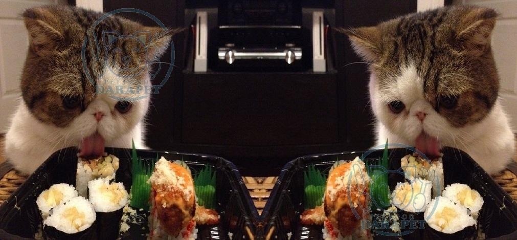 همه چیز در مورد غذای گربه