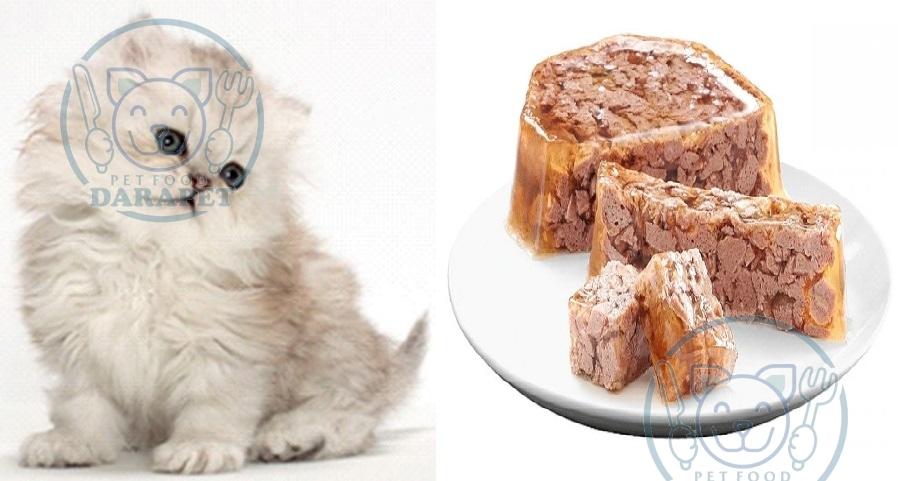 دستورالعمل مصرف روزانه کنسرو بچه گربه