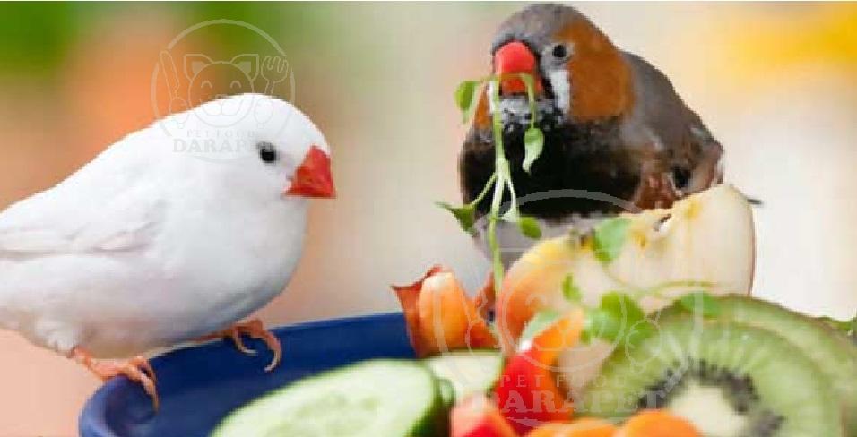 آشنایی با غذای فنچ