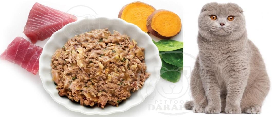 معرفی غذای مناسب برای گربه اسکاتیش