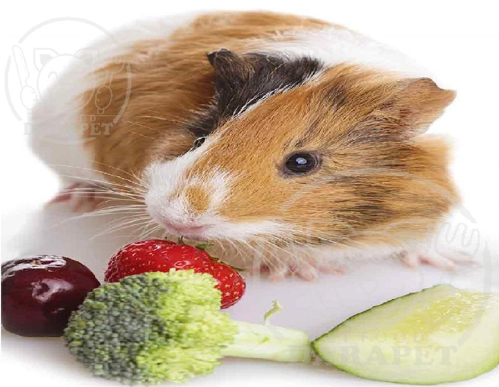 بررسی ویژگی های غذای مکمل خوکچه هندی