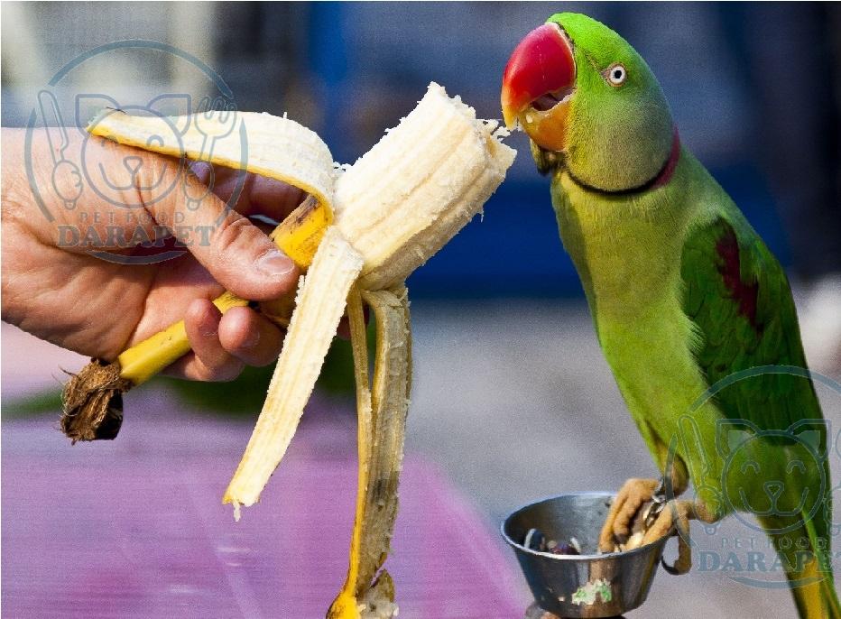 بهترین غذا برای طوطی ملنگو چیست؟