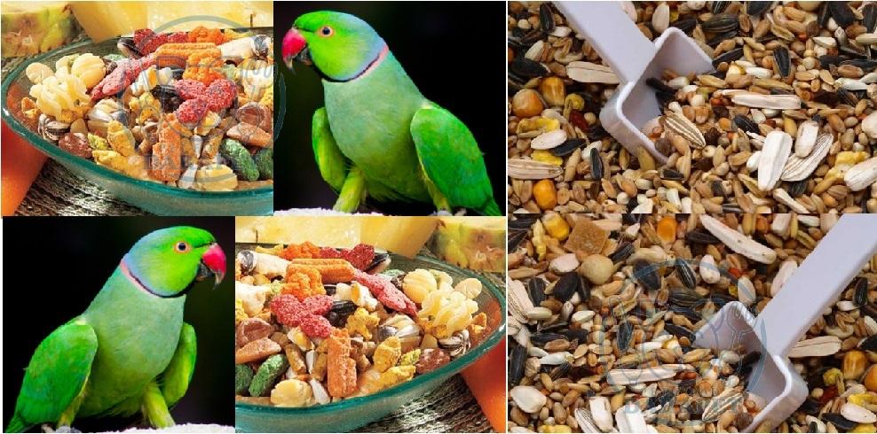 ارائه کننده غذای طوطی ملنگو