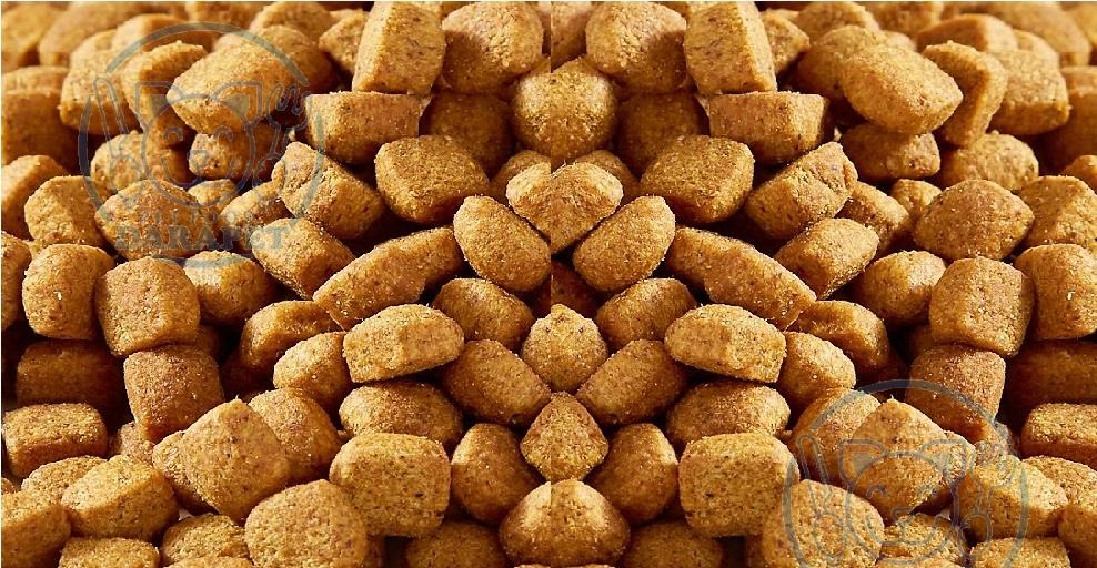 شرکت پخش غذای خشک سگ