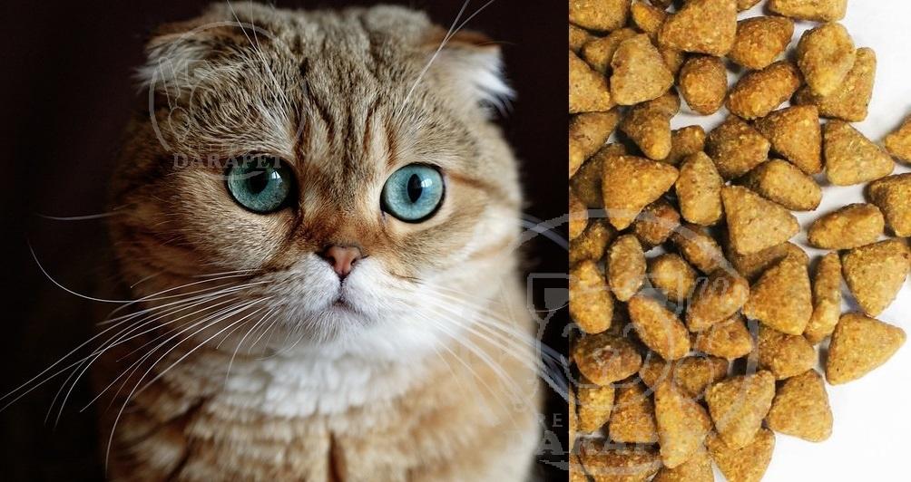 عمده فروشی غذای گربه اسکاتیش
