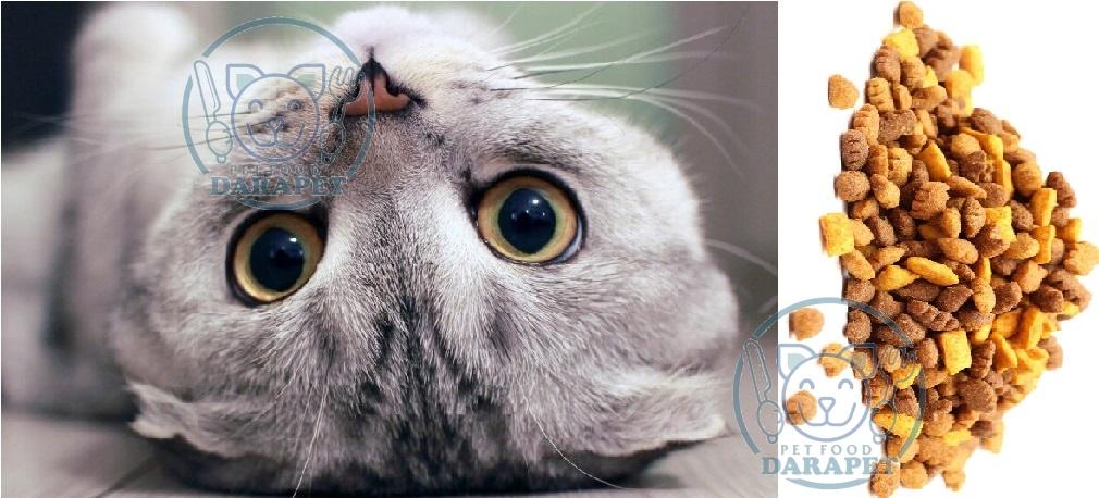 فروش ویژه غذای گربه اسکاتیش