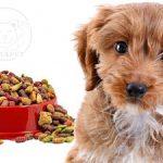 فروش غذای خشک سگ خانگی