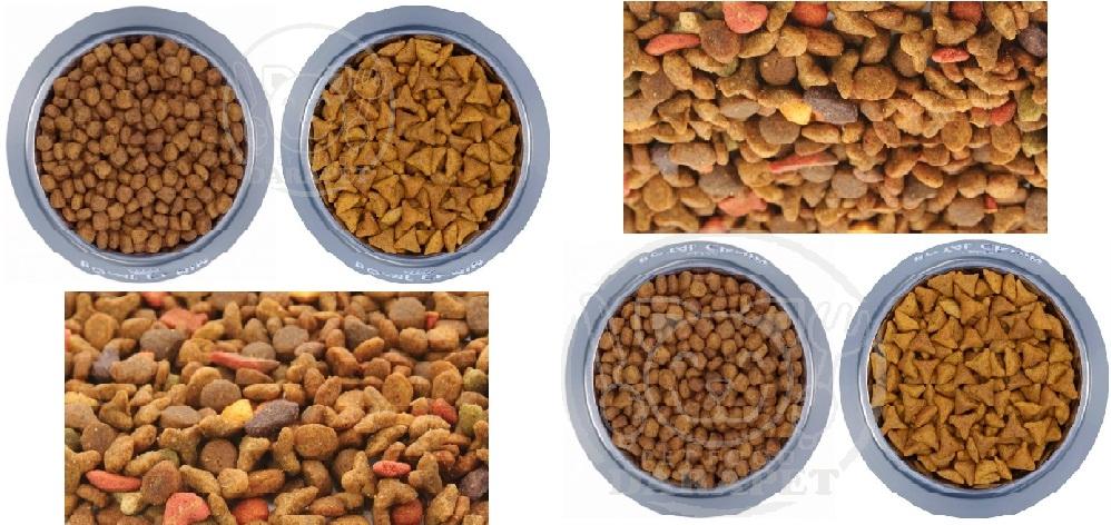 توزیع انواع غذای خشک گربه ایرانی