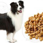 تامین کننده غذای خشک سگ بزرگ