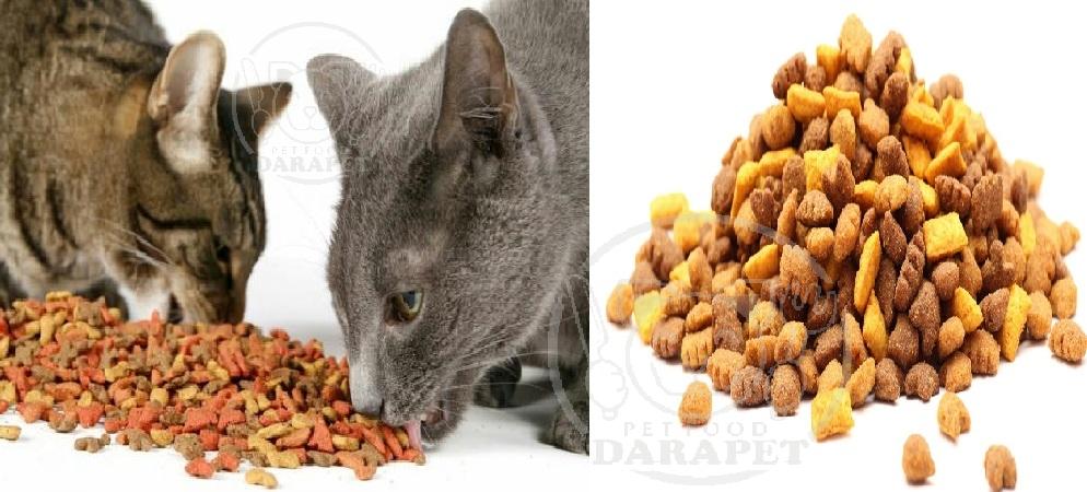 بررسی مشخصات غذا خشک گربه
