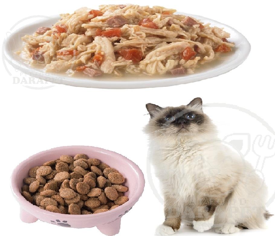 بهترین نوع غذا گربه چیست؟