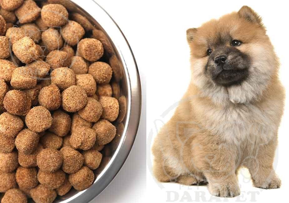 روش تولید غذای خشک سگ