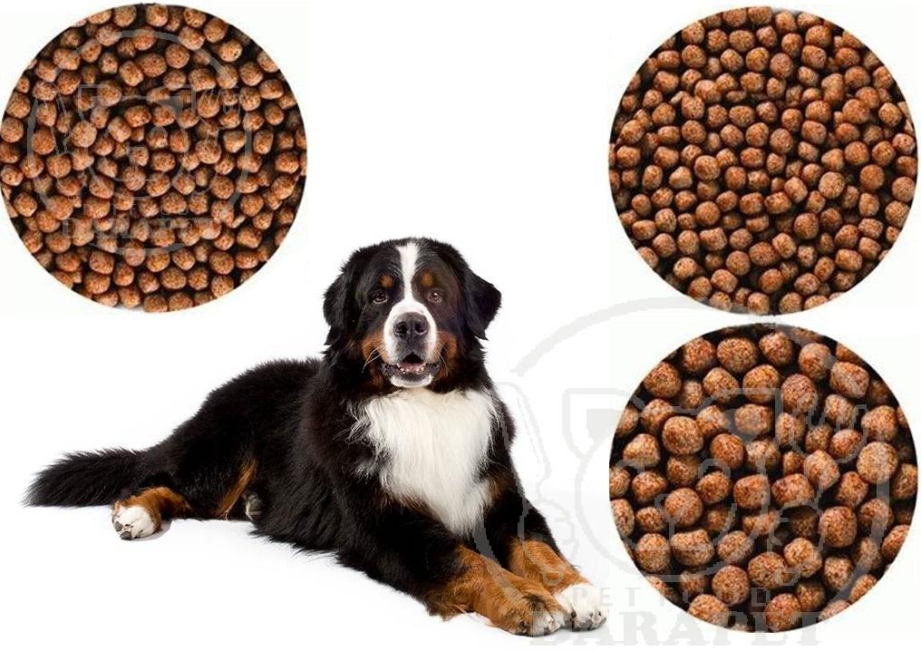 آشنایی با انواع غذای خشک سگ