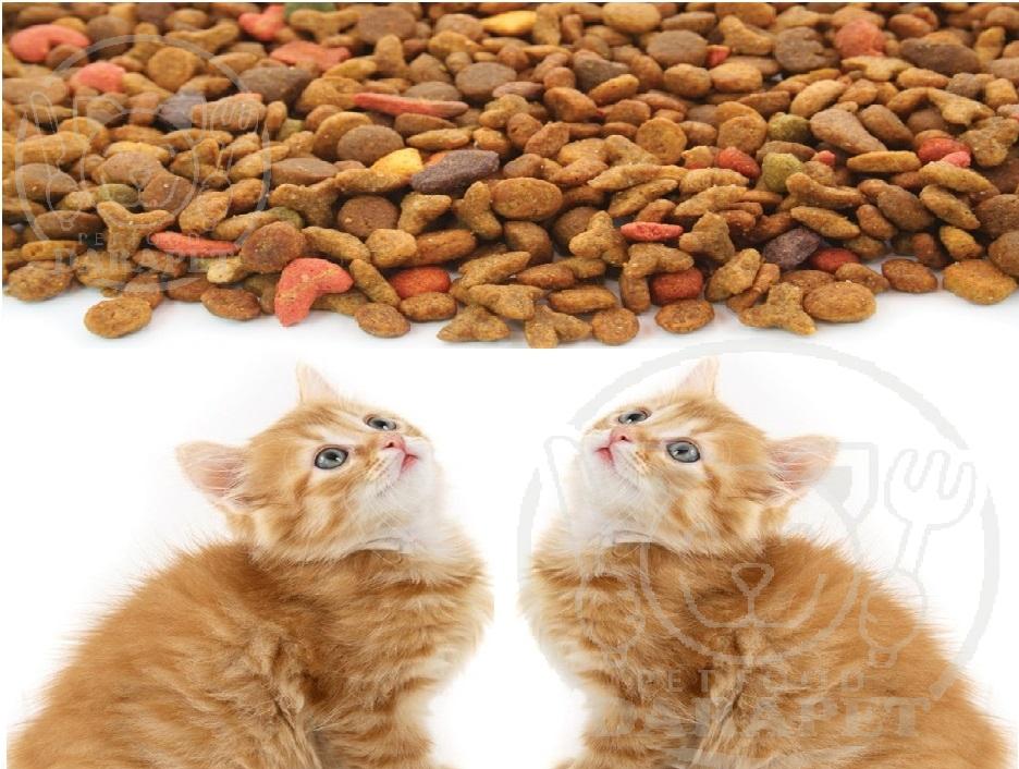 فروشنده برتر غذای خشک گربه ایرانی