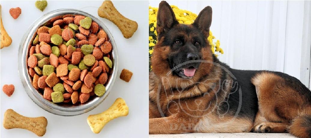 قیمت باورنکردنی غذای خشک سگ بزرگ