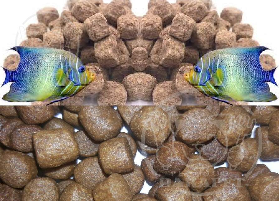 توزیع غذای ماهی اکواریومی ارزان