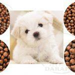 فروشنده انواع غذای خشک سگ نژاد کوچک