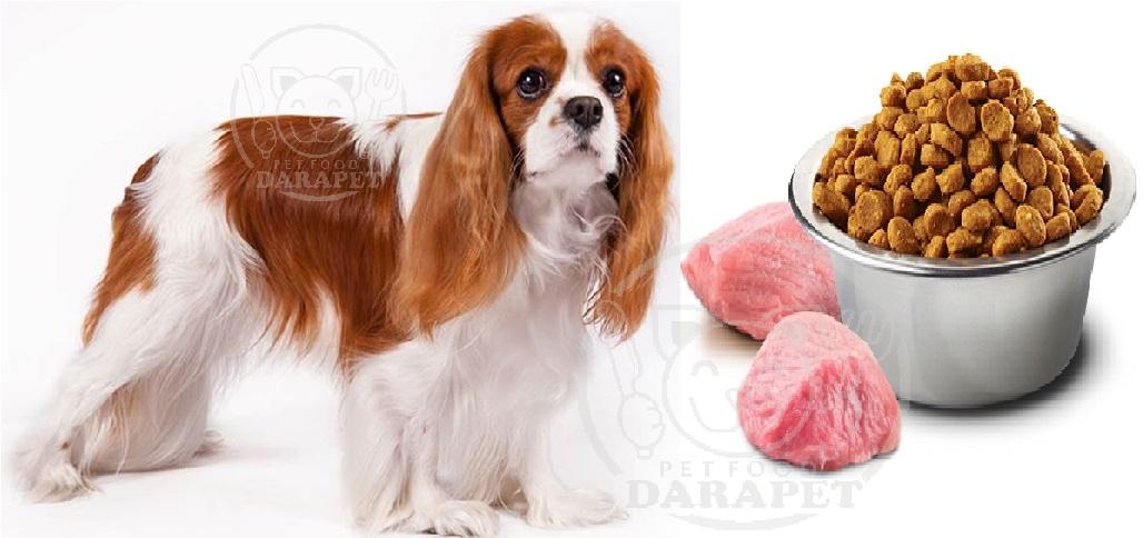 عوامل موثر بر کیفیت غذای خشک سگ