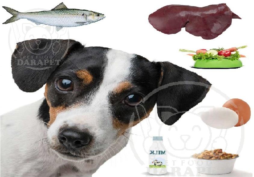 به سگ باید غذا چه بدهیم؟
