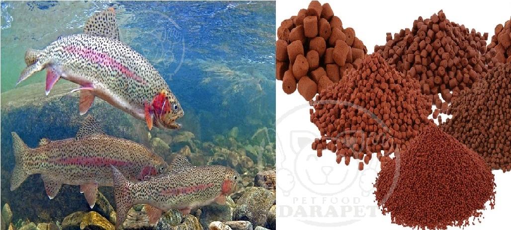 فواید خوراک پرواری ماهی قزل آلا چیست؟