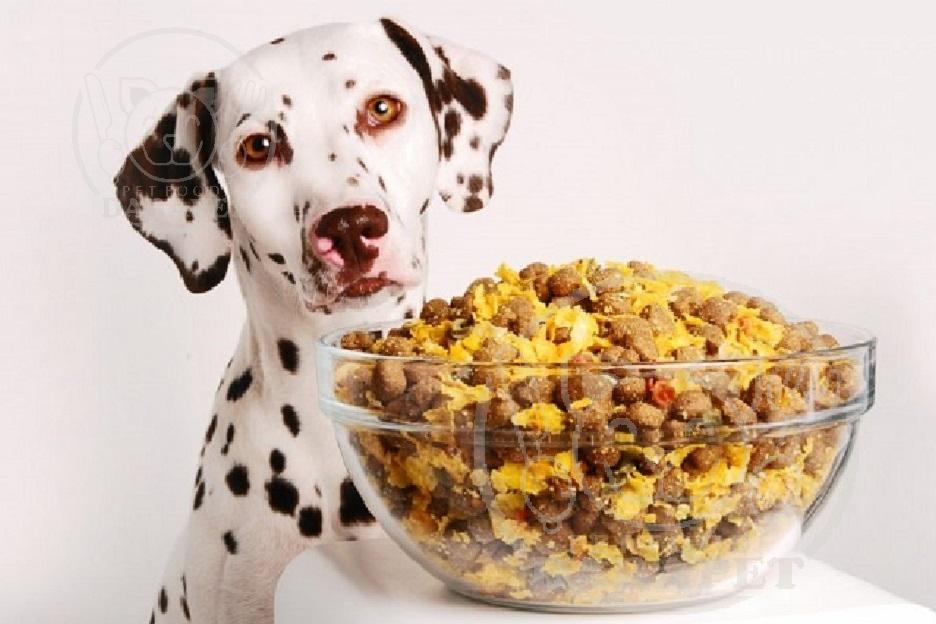 دلیل محبوبیت غذای خشک سگ چیست؟