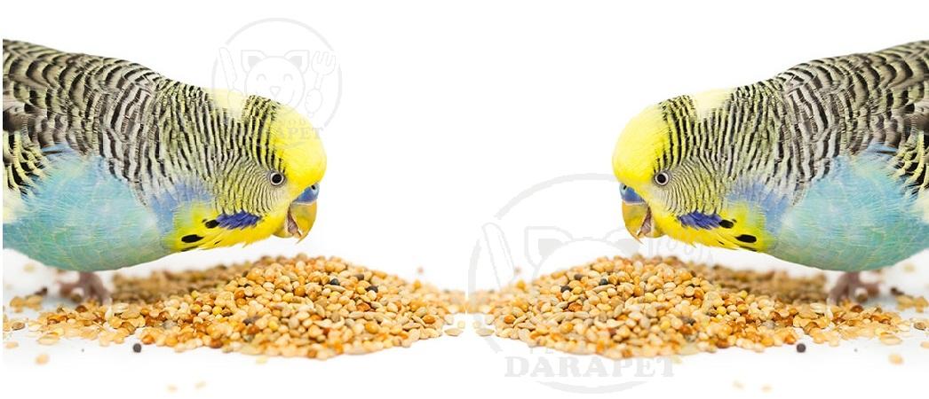 معرفی بهترین غذای مرغ عشق با کیفیت عالی