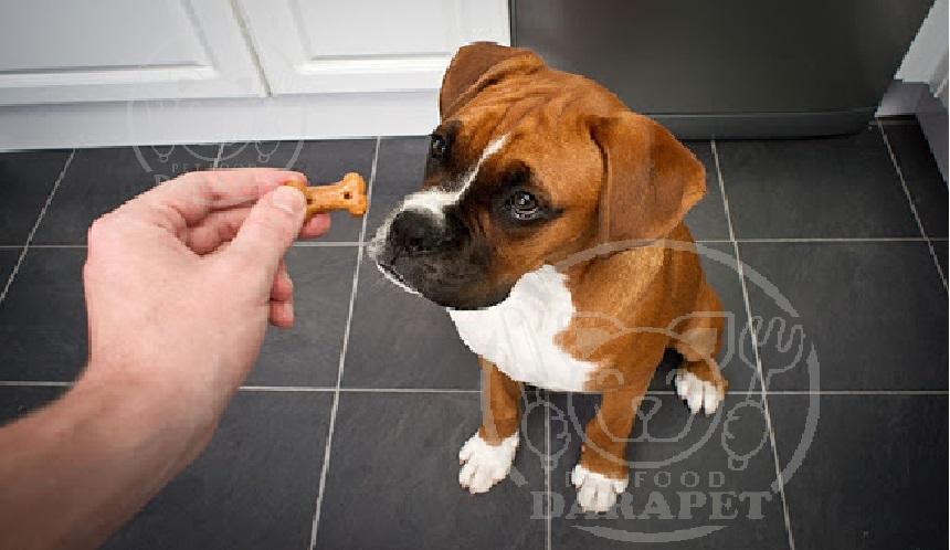 فواید استفاده از تشویقی سگ طرح استخوان