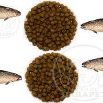بازار پخش خوراک پرواری ماهی قزل آلا