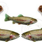 بهترین قیمت خرید غذا ماهی قزل آلا پرورشی