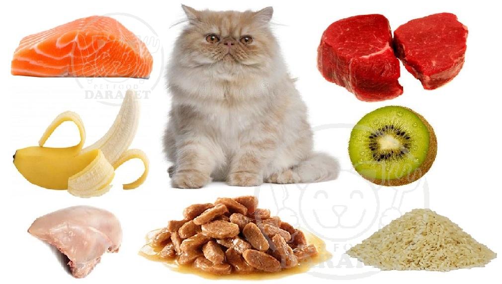 مواد تشکیل دهنده غذا گربه پرشین چیست؟