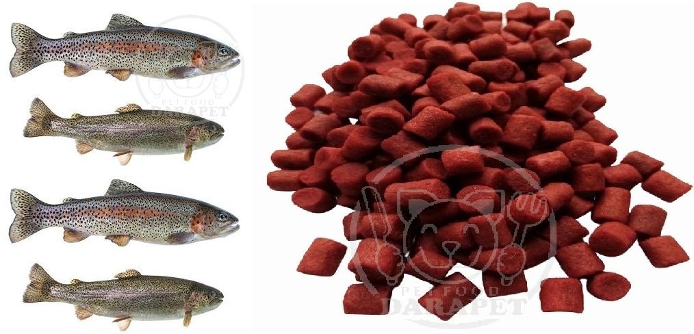 راهنمای خرید غذا ماهی قزل آلا پرورشی