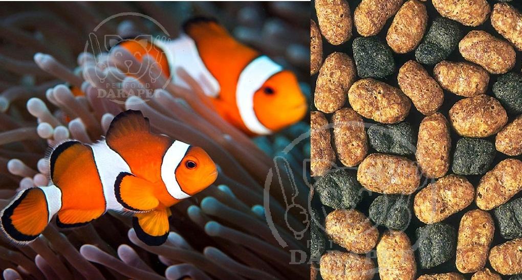خرید غذا ماهی زینتی آب شور