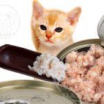 تولید کننده کنسرو گربه باکیفیت