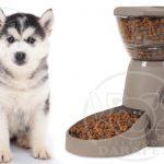 خرید مستقیم غذا خشک توله سگ هاسکی