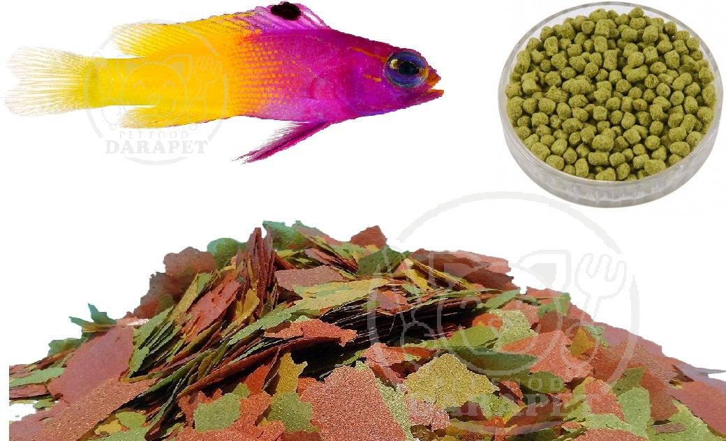 غذا ماهی زینتی آب شور چه ویژگی هایی دارد؟