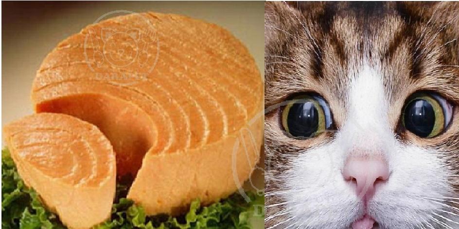 دلایل استفاده از کنسرو در رژیم غذایی گربه