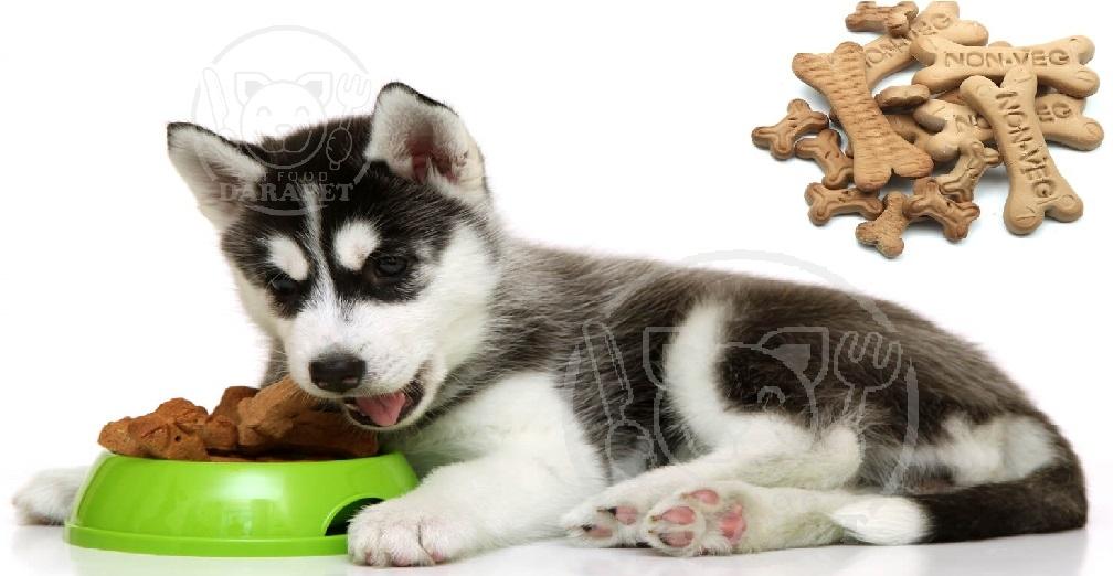 غذا خشک توله سگ هاسکی چیست؟