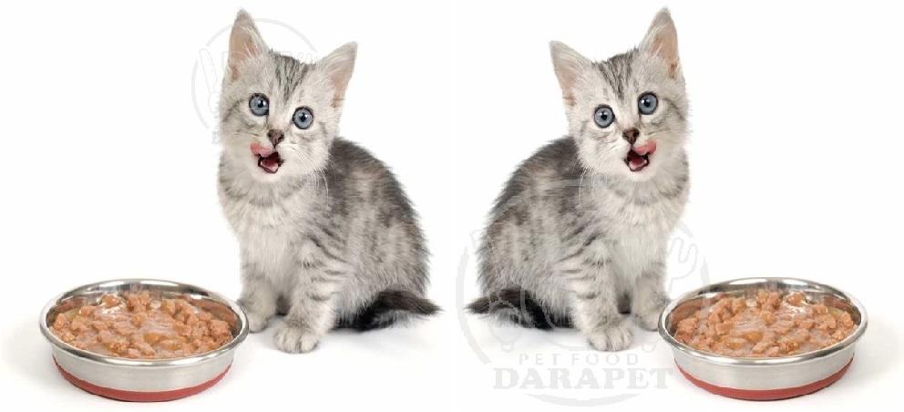 معرفی بهترین کنسرو غذا بچه گربه