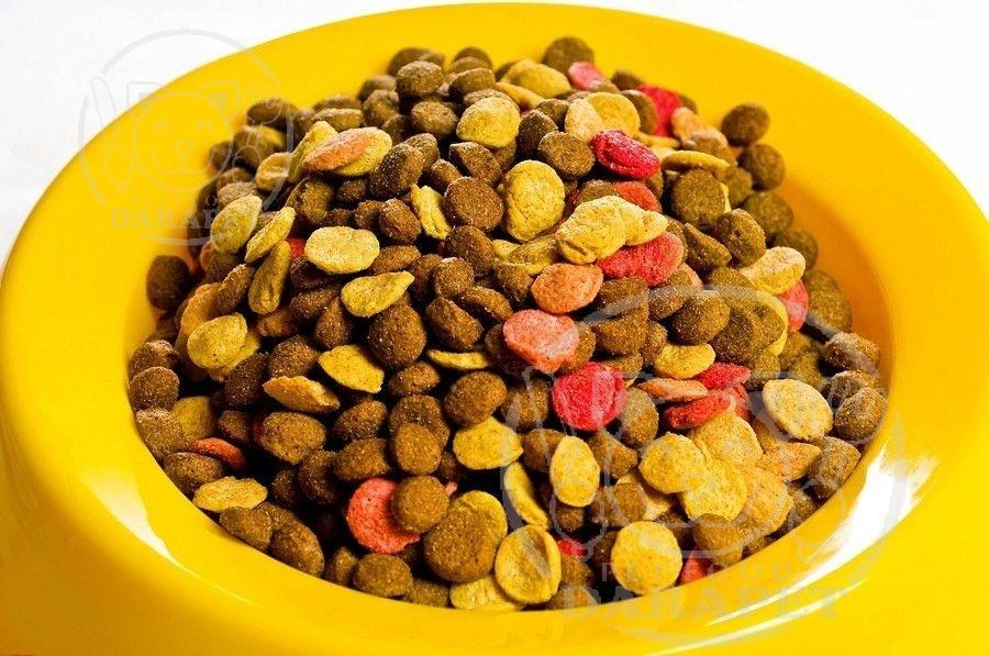صادرات غذا خشک سگ ارزان