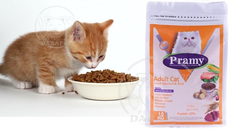 اطلاعاتی درباره غذای خشک مخصوص گربه