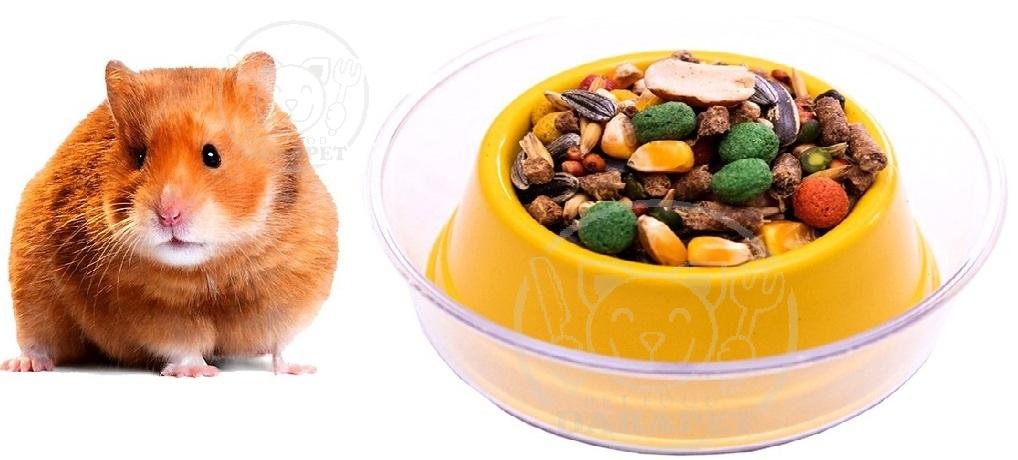طرز استفاده غذای همستر خانگی