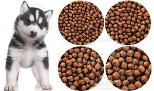 عرضه انواع غذای خشک برای توله سگ هاسکی