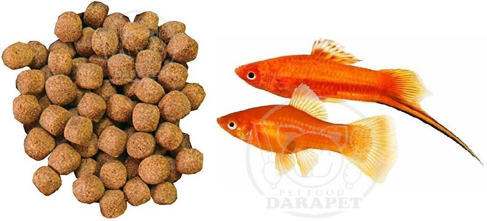 خصوصیات کامل غذا ماهی تزئینی