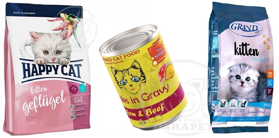 انواع گوناگون غذای بچه گربه