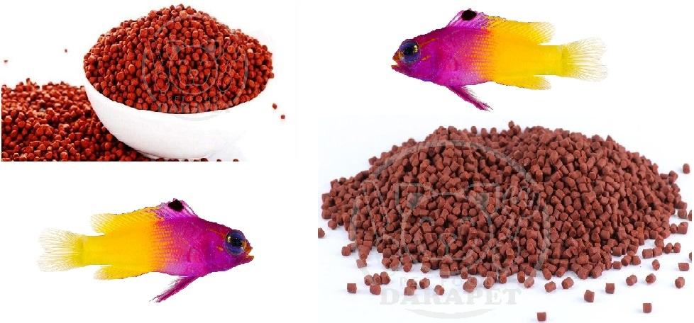 فروشگاه غذا ماهی زینتی با کیفیت مناسب